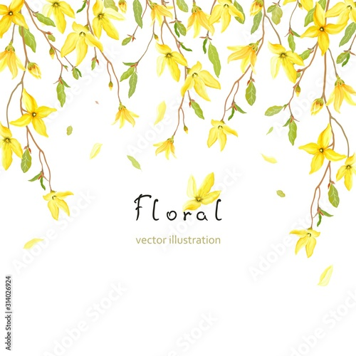 Slika na platnu Spring card for your text with blossoming yellow flowers and green leaves on branches Forsythia