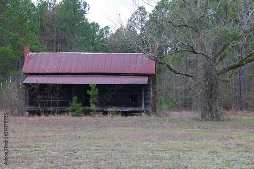 Fotografie, Tablou abandoned old run down shack cabin woods forest swamp