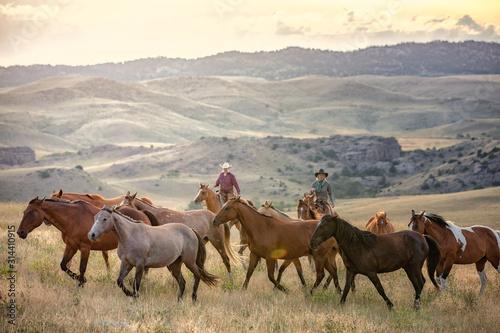 Obraz na plátně Herding Horses