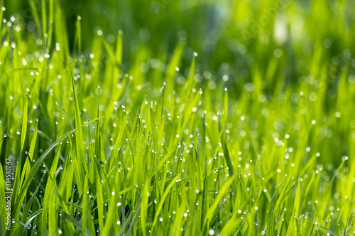 Photo dew drops on the green grass