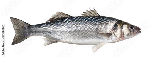 Photo One fresh sea bass fish isolated on white background