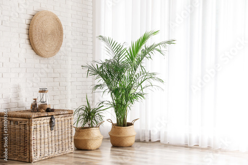 Fotografie, Obraz Beautiful green potted plants in stylish room interior
