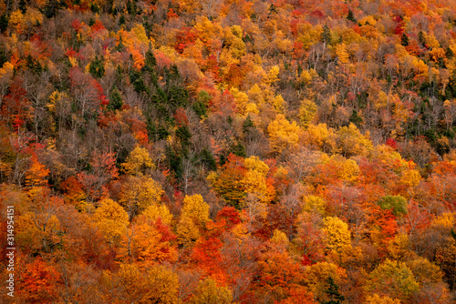 The white moutains forest colors during the fall season