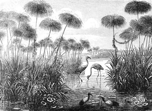 Vintage and retro collage illustration of Flamingo birds from Brockhaus Konversations-Lexikon 1908 background