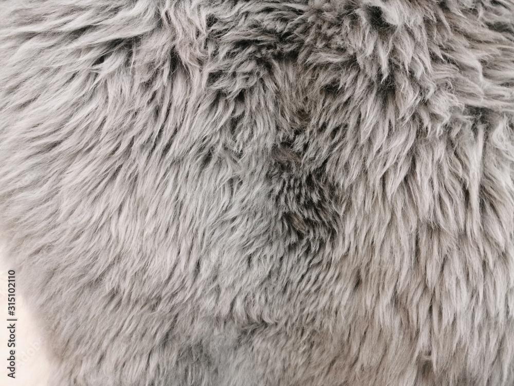 Futrzany dywan, powierzchnia owczej skóry. Szare futro z długim NAP. Poczucie ciepła i miękkości. <span>plik: #315102110   autor: annagolant</span>