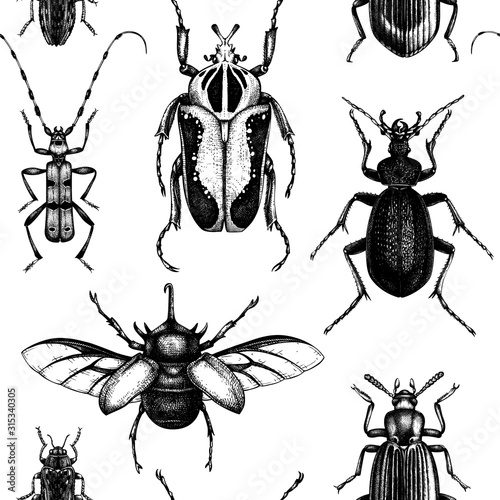 Foto Vector background with high detailed insects sketches