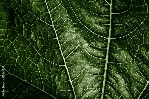 Fotomural green leaf close up - texture in the detail