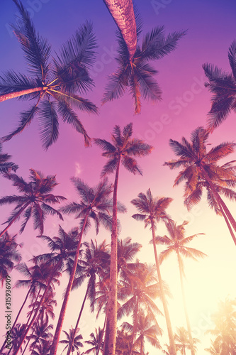 Looking up at coconut palm trees at sunset, color toning applied.