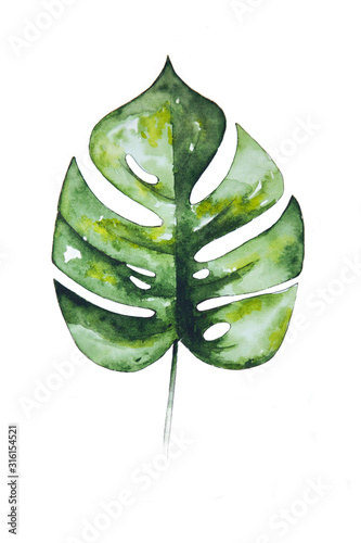 zielony-lisc-monstera-na-bialym