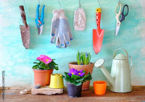 Fototapeta flowers and gardening utensils, springtime gardening, good copy space