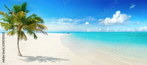 Beautiful palm tree on tropical island beach on background  blue sky with white clouds and turquoise ocean on sunny day. Perfect natural landscape for summer vacation, ultra wide format.