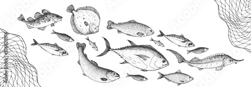Canvas Print Fish sketch collection