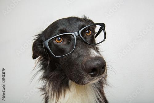 Foto Close up portrait of funny dog wearing eyeglasses