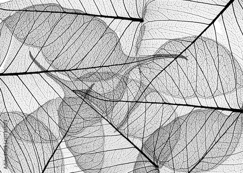 black leaves on white background - textured background