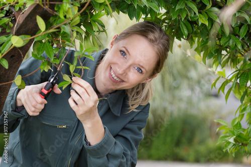 Slika na platnu portrait of female gardener trimming arched bush