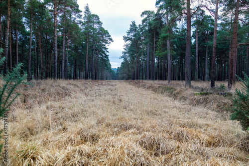 Canvas-taulu Firebreak amongst the trees in the New Forest, Hampshire in England, UK