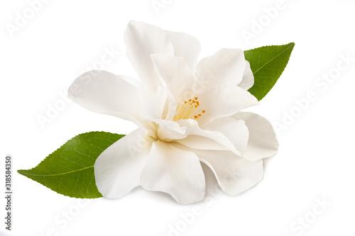 Fotomural camellia flower