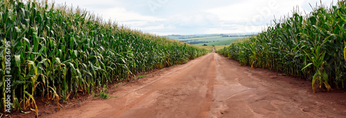 Photo Road in the middle of cornfields infrastructure and agriculture Brasil