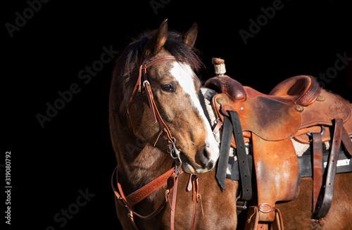 Fotografie, Tablou western horse black background