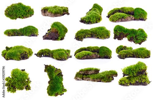 Photo Green moss isolated on white bakground