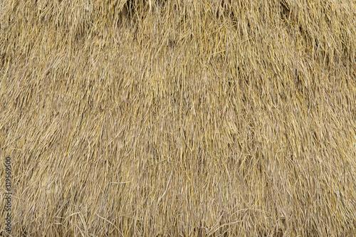 Obraz na plátně Dry straw neatly stacked vertically