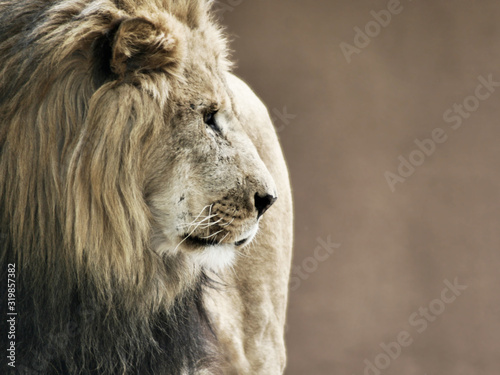 Photo Close-Up Of Lion At Zoo