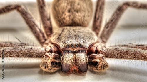 Fotografia Extreme Close-Up Of Arachnid