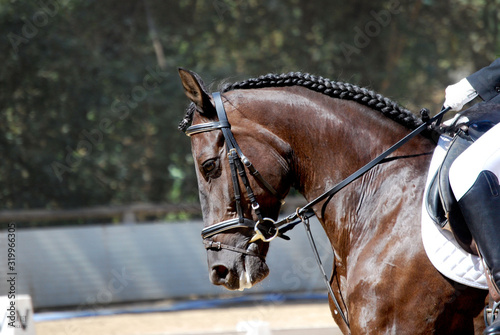Fotografie, Tablou Low Section Of Person Horseback Riding