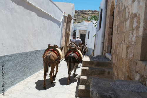 Canvas-taulu Rear View Of Man And Boy By Donkeys On Footpath