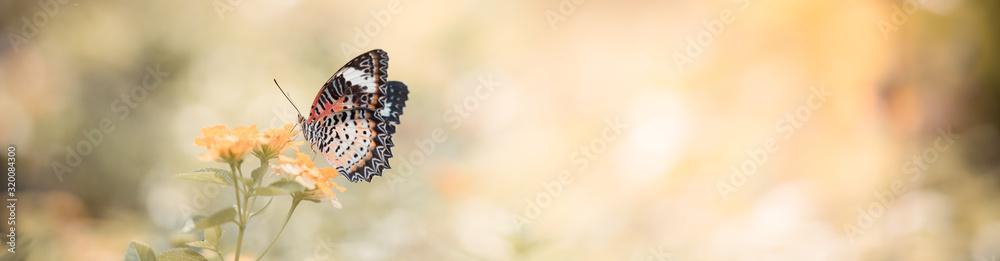 Zbliżenie natury widok motyl na zamazanym tle w ogródzie z kopii przestrzenią używać jako tło naturalny krajobraz, ekologia, świeży okładkowej strony pojęcie. <span>plik: #320084300   autor: Fahkamram</span>