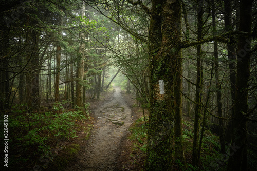 Vászonkép Appalachian Trail Blaze on Mossy Tree