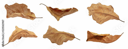 Fotografering dry leaf or dead leaf isolated on white background