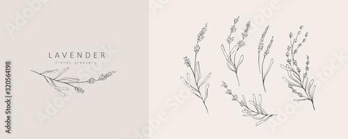 Fotografie, Tablou Lavender logo and branch
