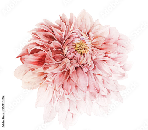 Foto Flowers watercolor illustration