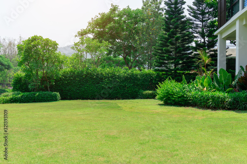 Fresh green grass smooth lawn as a carpet with curve form of bush, trees on the background, good maintenance lanscapes in a garden under cloudy sky and morning sunlight