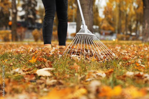 Canvas Print Person raking dry leaves outdoors on autumn day, closeup