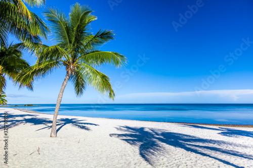 Fototapeta Palm trees on sandy Smathers Beach on the Atlantic Ocean in Key West Florida on