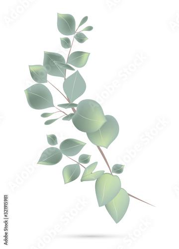 Naklejki na drzwi Liście eukaliptusa na gałęzi