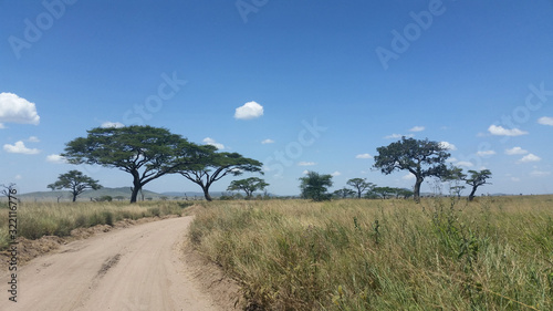 pusta szutrowa droga pośrdód traw i drzew na afrykańskiej sawannie