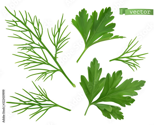 Foto Coriander leaves, dill herb