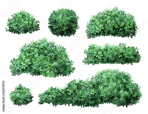 Fotografija Realistic garden shrub