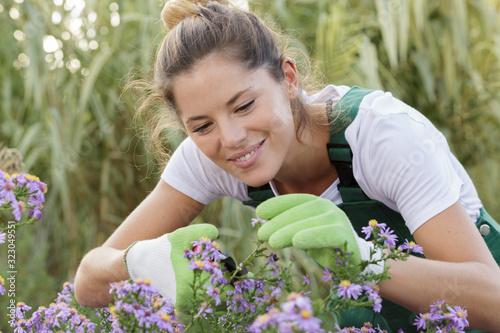 Valokuva female gardener cutting back flowers