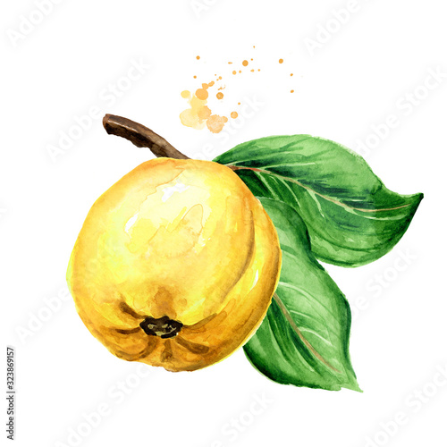 Photographie Fresh ripe yellow quince fruit on the branch