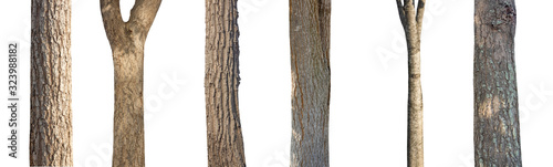 Photo isolated set tree trunk Collection on White background.