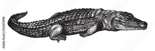 Fotografiet Nile crocodile (Crocodylus niloticus) / vintage illustration from Brockhaus Konv