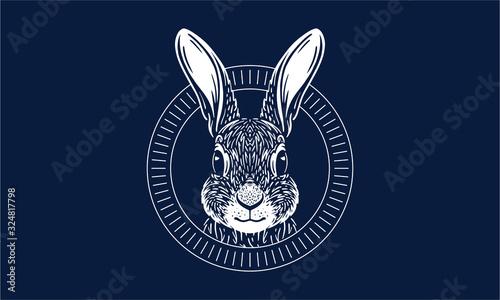 Tablou Canvas rabbit on dark background
