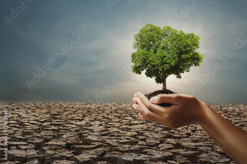 Obraz na płótnie hand holding big tree on arid with sunshine background