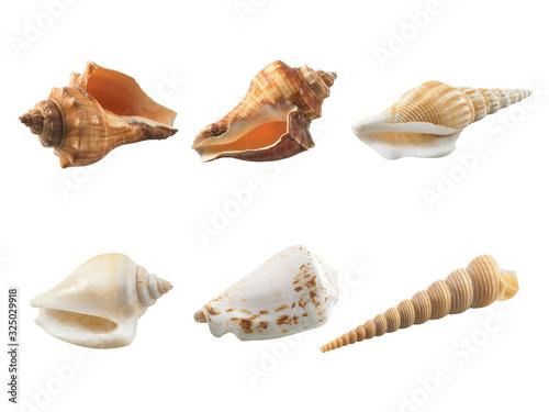 Fotografía Empty seashell isolated on white background
