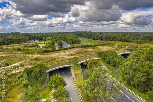 Ecoduct wildlife crossing Fototapeta