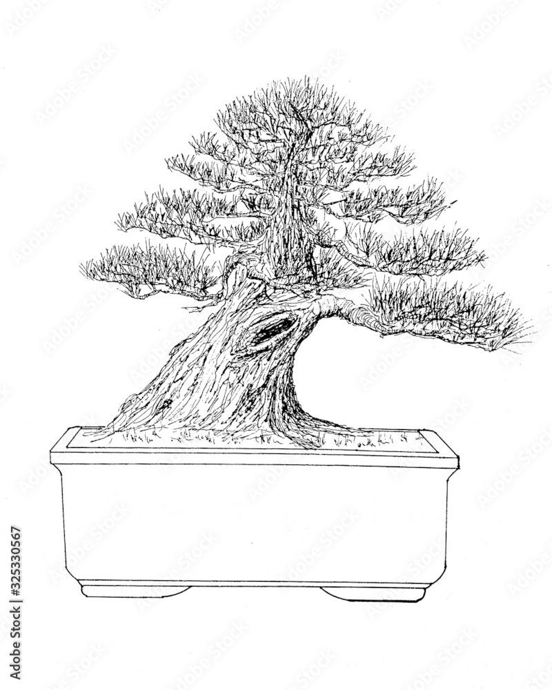 Bonsai Drawing <span>plik: #325330567   autor: Fernando</span>